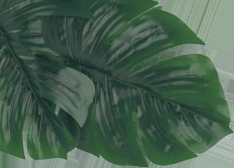 Leaf Img
